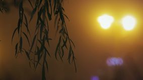 Sylwetki liście przeciw nocy miastu zaświecają zdjęcie wideo