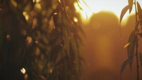 Sylwetki liście przeciw nocy miastu zaświecają zbiory