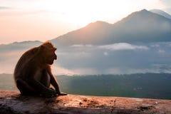 Sylwetki małpa w górach obrazy royalty free