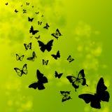 Sylwetki motyle Zdjęcie Stock