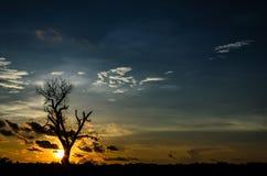 Sylwetki nieżywy drzewo Fotografia Royalty Free