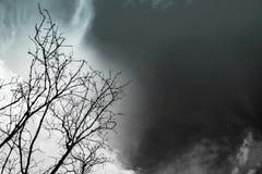 Sylwetki nieżywy drzewo na ciemnym dramatycznym nieba tle dla strasznego o Obrazy Royalty Free