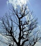 Sylwetki Nieżywy drzewo pod niebieskim niebem Zdjęcie Royalty Free