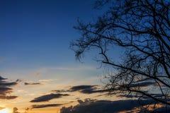 Sylwetki niebo przy zmierzchem jako tło i gałąź Obrazy Stock