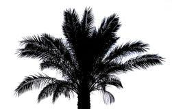 sylwetki palmowy drzewo Zdjęcie Royalty Free
