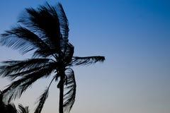 sylwetki palmowy drzewo Zdjęcia Royalty Free