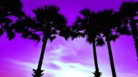 Sylwetki palmy na plaży przeciw tłu położenia słońce zdjęcia royalty free