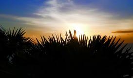Sylwetki palmy na plaży przeciw tłu położenia słońce obraz stock
