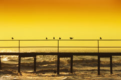 Sylwetki ptaków seagulls molo na tle morze Obraz Royalty Free