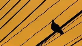 Sylwetki ptaki a Zdjęcia Royalty Free