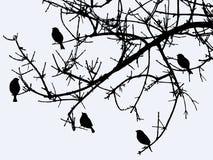 Sylwetki ptaki na gałąź w zimie Obrazy Stock