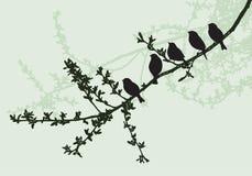 Sylwetki ptaki siedzi na gałąź ilustracja wektor