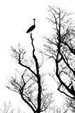 sylwetki ptasi drzewo Zdjęcie Stock