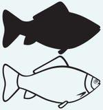 Sylwetki ryba ilustracji