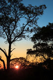 Sylwetki sępy w drzewie przy zmierzchem Obrazy Stock