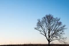 sylwetki samotny drzewo Zdjęcia Royalty Free