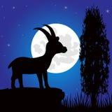 Sylwetki sawhorse halna księżyc w nocy Fotografia Royalty Free