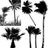 Sylwetki tropikalni drzewka palmowe na odosobnionym tle Ilustracji