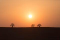 Sylwetki trzy drzewa na wzgórzu podczas zmierzchu Zdjęcia Stock