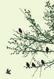 Sylwetki wróble na gałąź w wiośnie ilustracja wektor