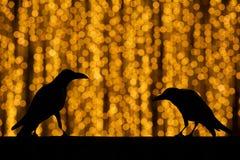 Sylwetki wrona z świątecznego plamy bokeh eleganckim abstrakcjonistycznym backgro Fotografia Stock