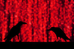 Sylwetki wrona z świątecznego plamy bokeh eleganckim abstrakcjonistycznym backgro Zdjęcia Royalty Free