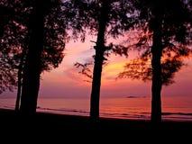 sylwetki wschód słońca drzewo Zdjęcie Royalty Free