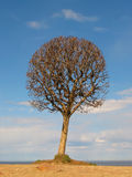 sylwetki złocisty drzewo Zdjęcia Stock
