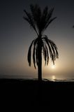 Sylwetkowa palma Zdjęcie Stock
