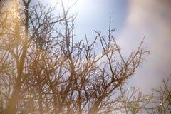 Sylwetkowe gałąź z kolorowym niebem zdjęcie stock