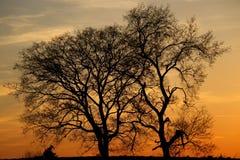 Sylwetkowi drzewa na pięknym wieczór obraz royalty free