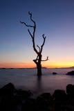 sylwetkowy drzewo Zdjęcia Stock
