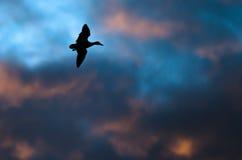 Sylwetkowy kaczki latanie w zmierzchu niebie obraz stock