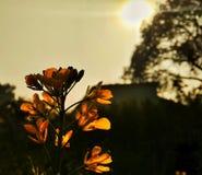 Sylwetkowy, kwiat zdjęcia stock