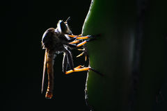 Sylwetkowy mały Dragonfly Zdjęcia Royalty Free