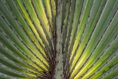 Symétrie dans la nature Photographie stock