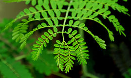 Symétrie de natures Photos libres de droits