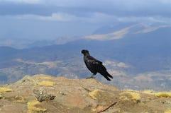 Symanski mountains is a unique world of Ethiopia. royalty free stock photo