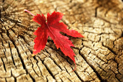 Symbol of autumn Royalty Free Stock Photography
