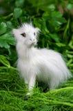 Symbol of 15 in the Chinese horoscope, goat. Symbol of 2015 in the Chinese horoscope, goat Royalty Free Stock Photo