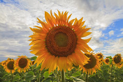 Symbol of the deity of the sun. Agrocultura stock image