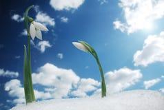 Symbol des Frühlinges Lizenzfreie Stockbilder