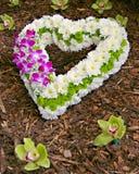 symbol för blommahjärtaförälskelse Royaltyfri Bild