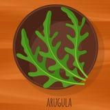 Symbol för vektor för Arugulalägenhetdesign Royaltyfri Foto
