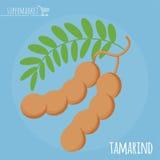 Symbol för vektor för tamarindfruktlägenhetdesign Royaltyfri Bild