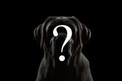 Symbol-Frage über Porträt des Hundes Stockbild