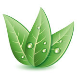 Vector symbol of green leaves. With drops of water Royalty Free Stock Photo