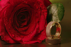 Love and happiness. Happy marriage. Rings and red rose with water drops Stock Images