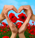 Symbol Heart 5. Female hands showing heart symbol over colorful poppy field summer nature background love and peace concept isolated with clipping path royalty free stock photography