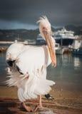Symbol of the island - pelican Petros, Mikonos, Greece Royalty Free Stock Photography